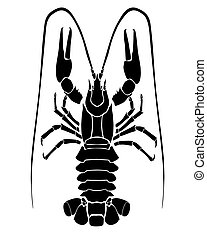 lobster - vector image of lobster on white