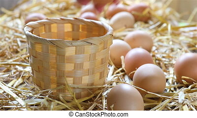 Local farmer collects eggs from chicken coop and places them...
