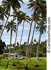 locale, casa, in, boschetto palmo, vanua, levu, isola, figi