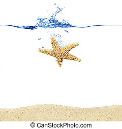 loccsanás, tengeri csillag