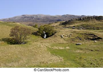Loch Assynt Waterfall