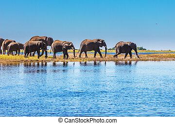 loch, bewässerung, elefant