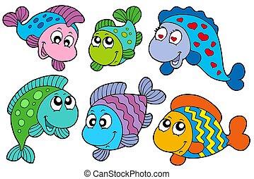 loco, peces, colección
