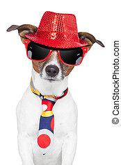 loco, perro, sombrero, anteojos, divertido, corbata, tonto