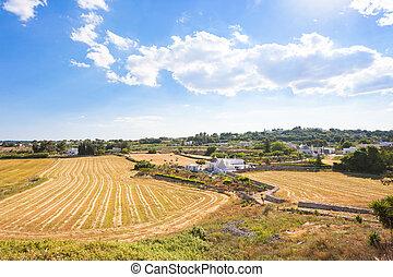 locorotondo, apulia, -, landwirtschaft, in, der,...