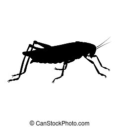 Locust silhouette isolated on white background. Vector.