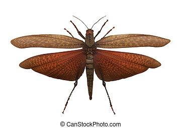 Locust - The adult locust is the big wrecker of an...