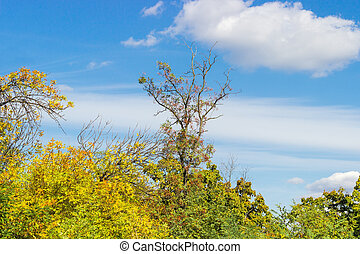Locust tree with dry branches over other trees against sky