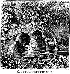 Lodges and dams built by beavers vintage engraving