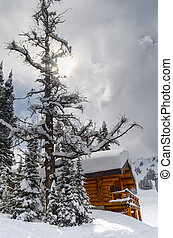 Log cabin in the snow surrounded by evergreens
