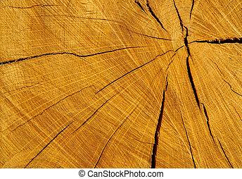Log - cracked pine tree log cross section