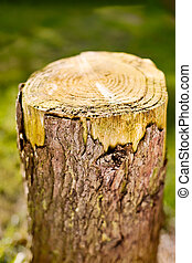 Log - Dry Old Tree Stump