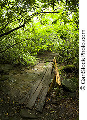 Log Footbridge, Nature Trail Scenics, Great Smoky Mtns Nat. Park, TN