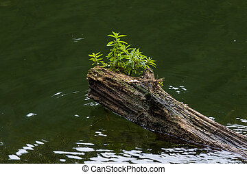 log in water - old mossy sunken broken log in lake water
