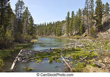 Log jam in a river in central Oregon. - Log jam in a river...