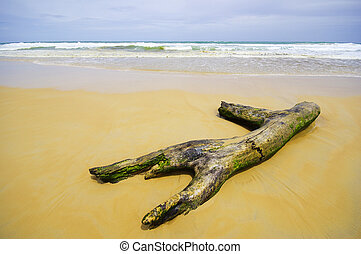 log on south of Thailand, Phuket Beach