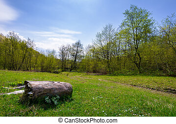 log on the grassy meadow among the forest. beautiful nature...