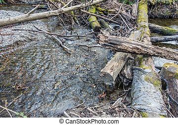 Log Pile In Stream 5