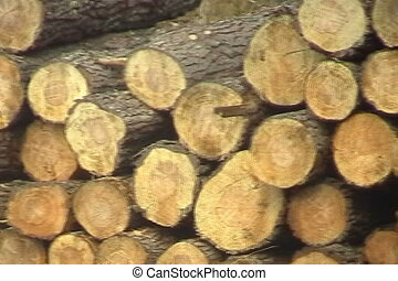 Log Stockpile