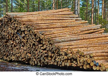 Log wood pile - Pile of pine tree logs in a forest