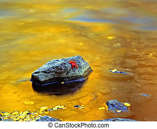 LoganCanyon - A canyon maple leaf on a rock in the Logan...