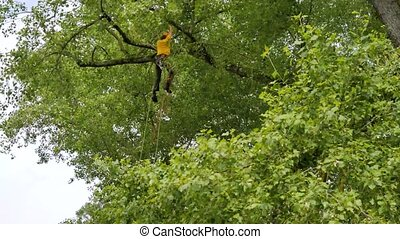 Logger sawing tree branches. - Work on the tree height...