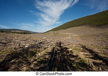 Logging clear cut