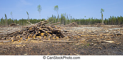 Forest cleared by logging in the north of Saskatchewan Canada
