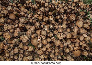Logging in Derbshire Dales UK