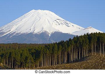 Clearcut logging of a cedar forest near Mt. Fuji, Japan
