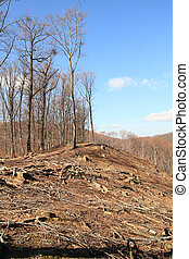 Logging - Industrial deforestation and logging