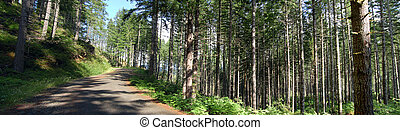 Logging road - A logging road that goes through a forest in...