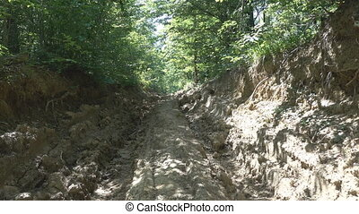 Logging road - Temporary logging road in broad-leaved forest...