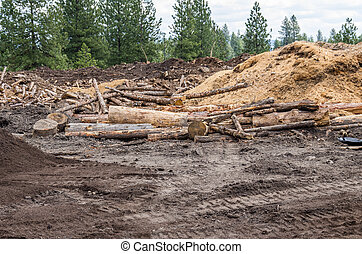 Logging site in the forest with logs