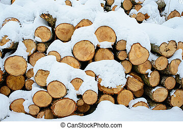 Logging stack in the forest during the winter