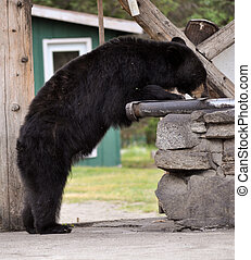 logia, taku, oso