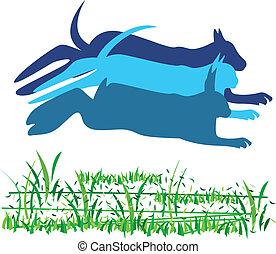 logo, kat, dog, konijn, paardrijden