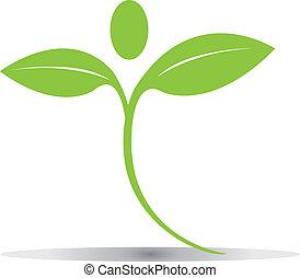 logo, liście, wektor, zielony, eps10