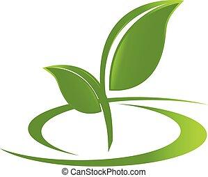 logo, liście, zdrowie, natura