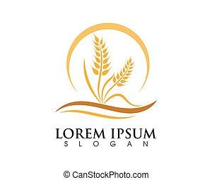 logo, pszenica, szablon