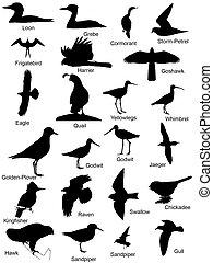 logotipos, siluetas, pájaro