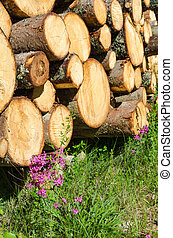 Logpile with purple flowers - Timber stack with blossom...