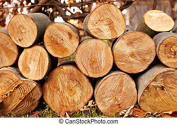 Logs - A pile of freshly cut logs outdoor