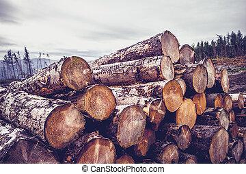Logs against a gloomy sky