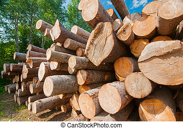 Logs at lumber mill - Close up of logs stacked at lumber...