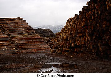 Logs at the Mill