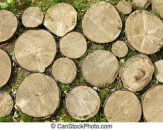 Logs Background - Stumps