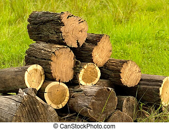 logs cut with chainsaw ready for firewood pile