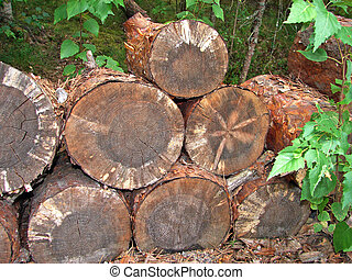 Logs for wood industry - The cut trees for the wood industry