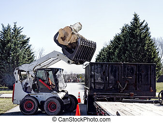 Logs Lifted into Flatbed - Tree cut down and logs lifted ...